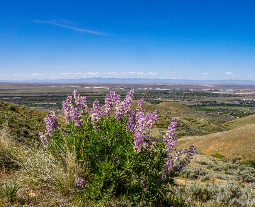 view of boise from homestead trail