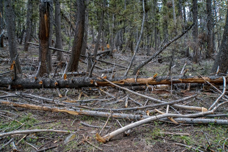 fallen trees on the east fork of the north fork of the wood river