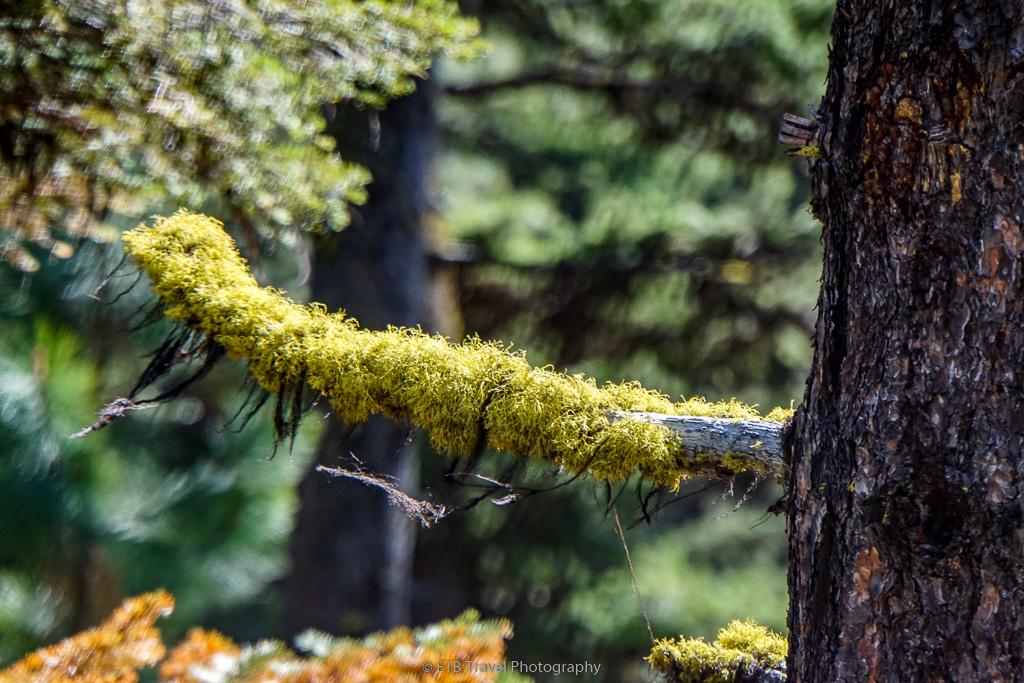 mossy tree limb