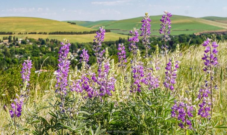 wildflowers in rock hill loop in dayton