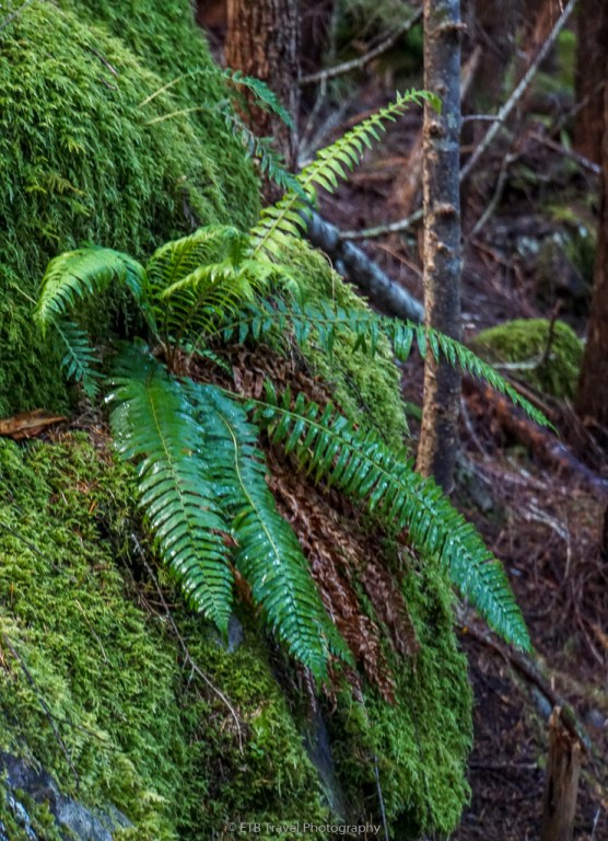 fern growing from rock at milford lakes trail