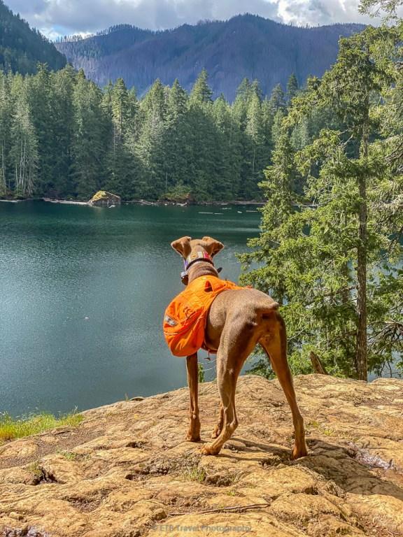 lower lena lake, a dog friendly hike on the olympic peninsula