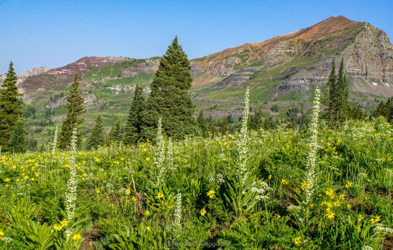 wildflowers on scarp ridge trail