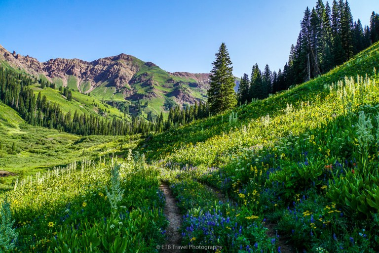 wildflowers on rustler's gulch trail in crested butte