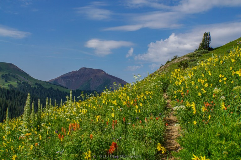 wildflowers on hasley basin loop near crested butte