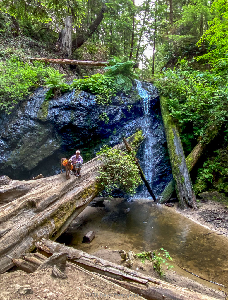 waterfall at russian gulch state park