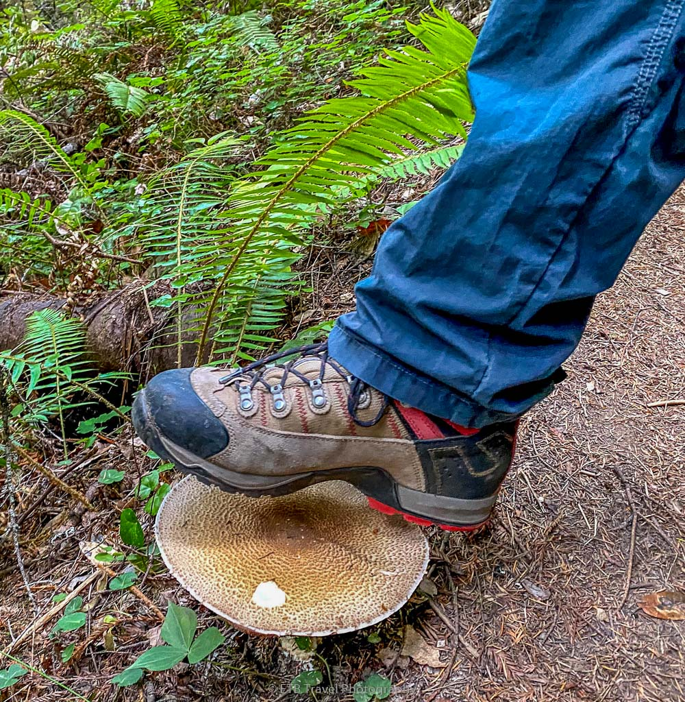 giant mushroom compared to dustin's foot