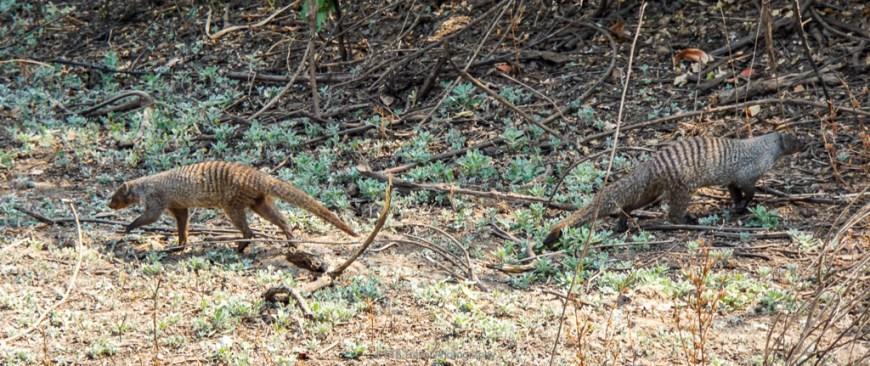 mongoose at flatdogs