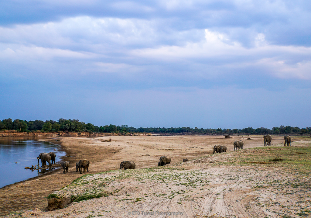 elephants going to river