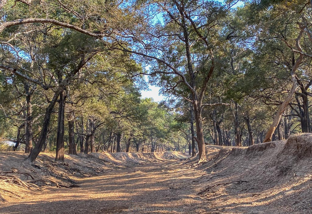 woodlands in south luangwa national park