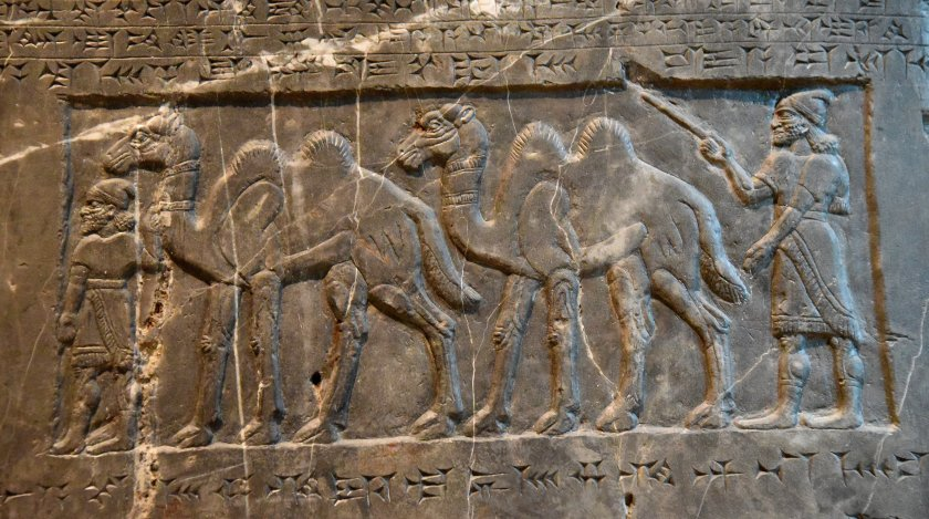Side C: Two attendants bring two-humped (Bactrian) camels from Gilzanu. Photo © Osama S. M. Amin. Black Obelisk of Shalmaneser III.