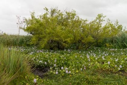 Echantillon de la diversité de la flore de la réserve