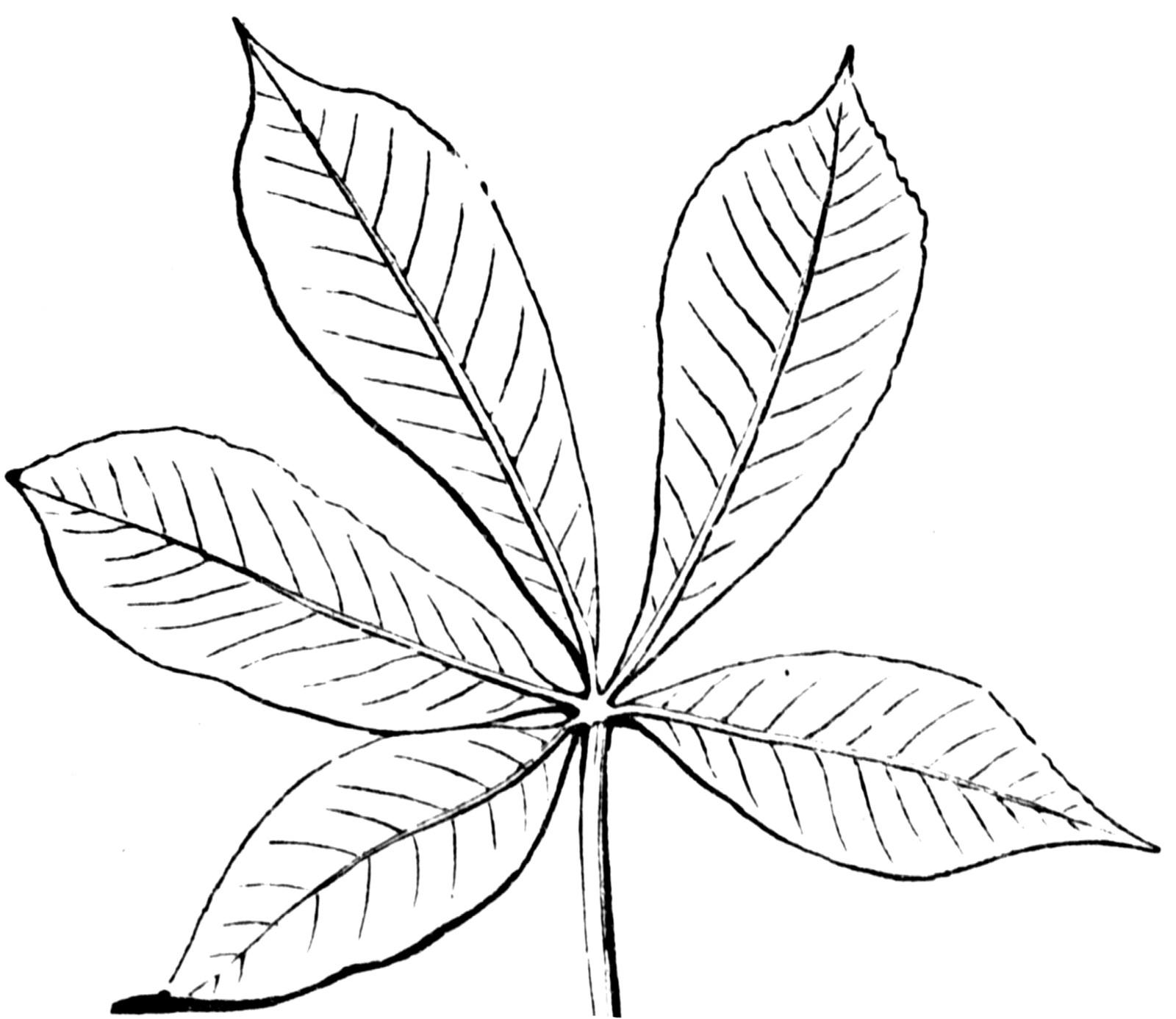 Compound Leaf Clipart Etc