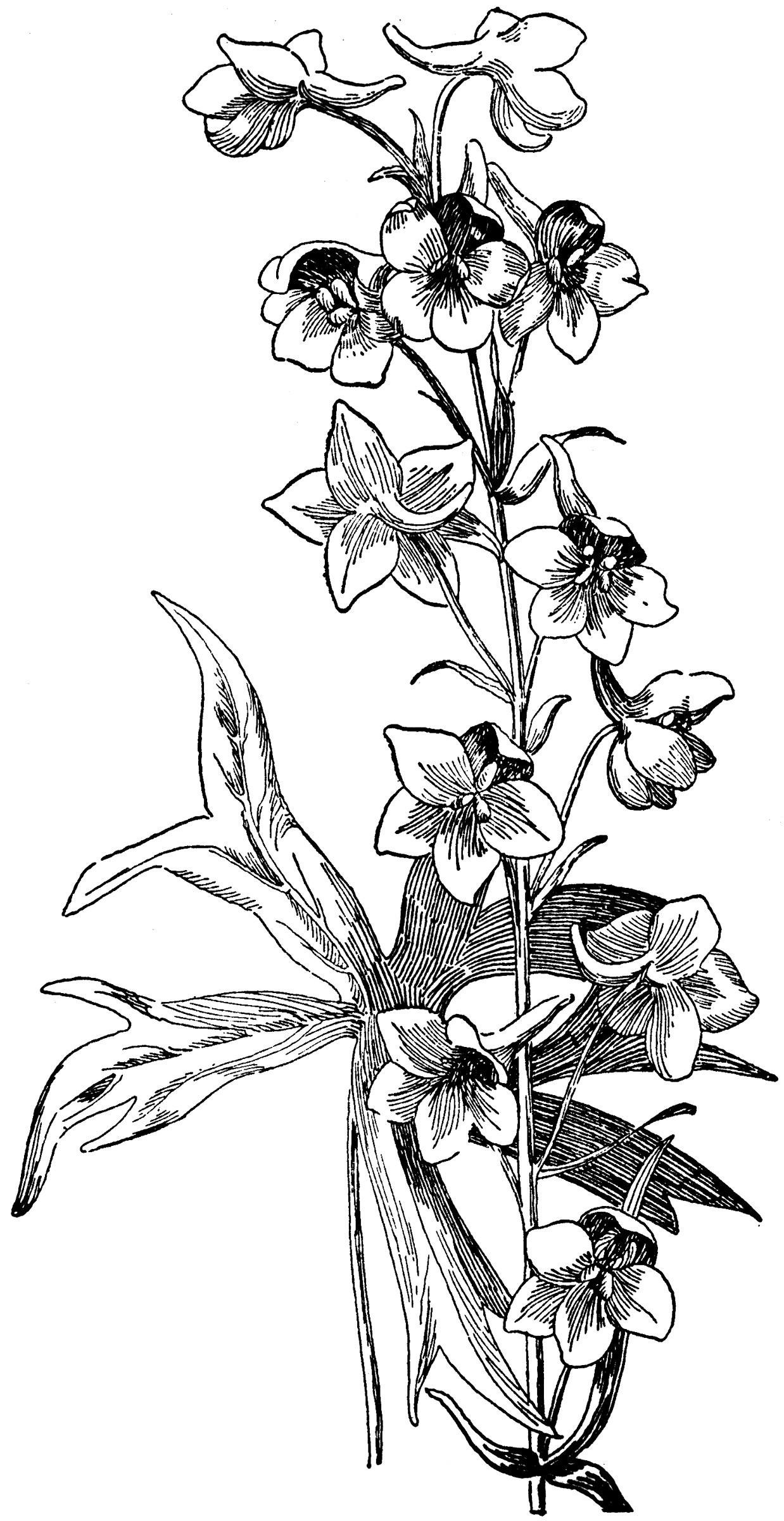 White Flowering Shrubs