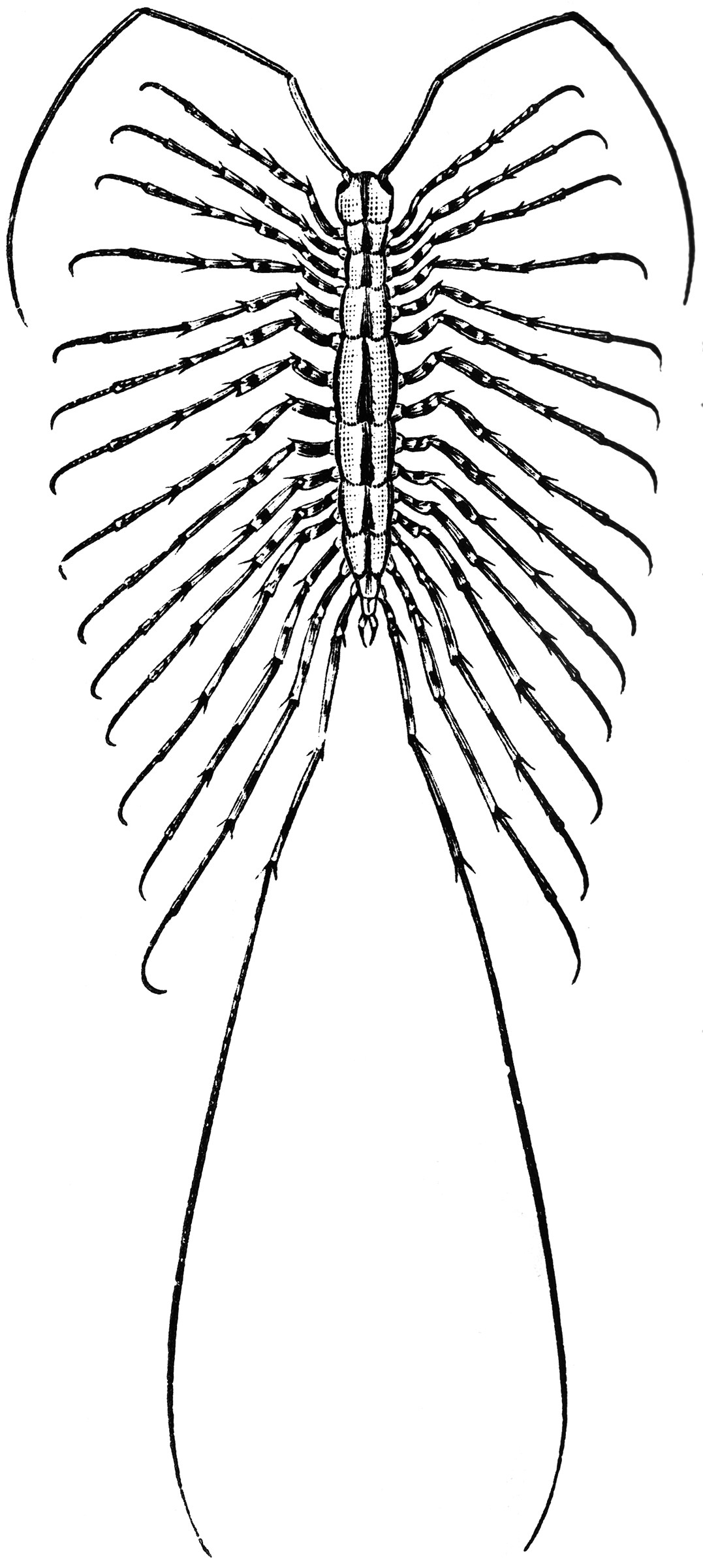 House Centipede Clipart Etc
