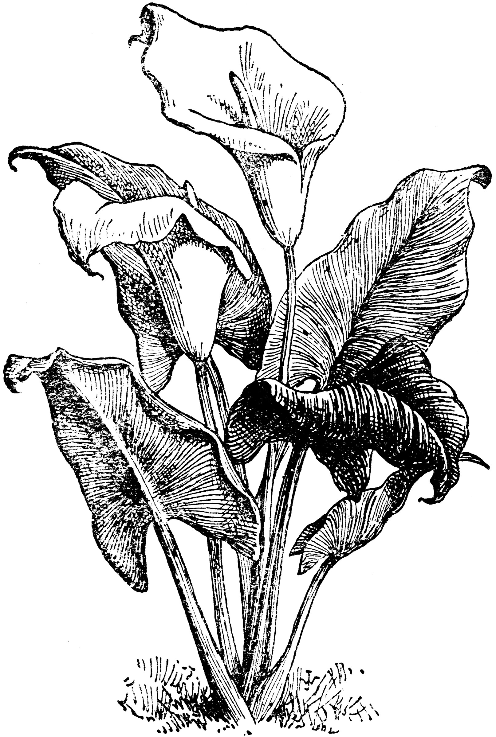 And Ink Flowers Drawing Pen Vase