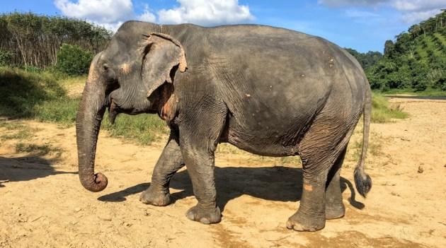 生まれて初めて大好きな象に触れることができました(Photo by 朝比奈)