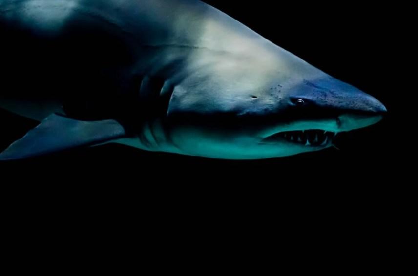 この大きな口、鋭い歯。とてもサメには敵わない(画像はイメージです)