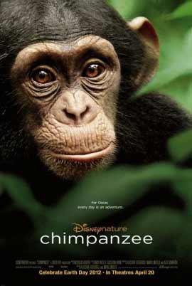 Chimpanzee one-sheet