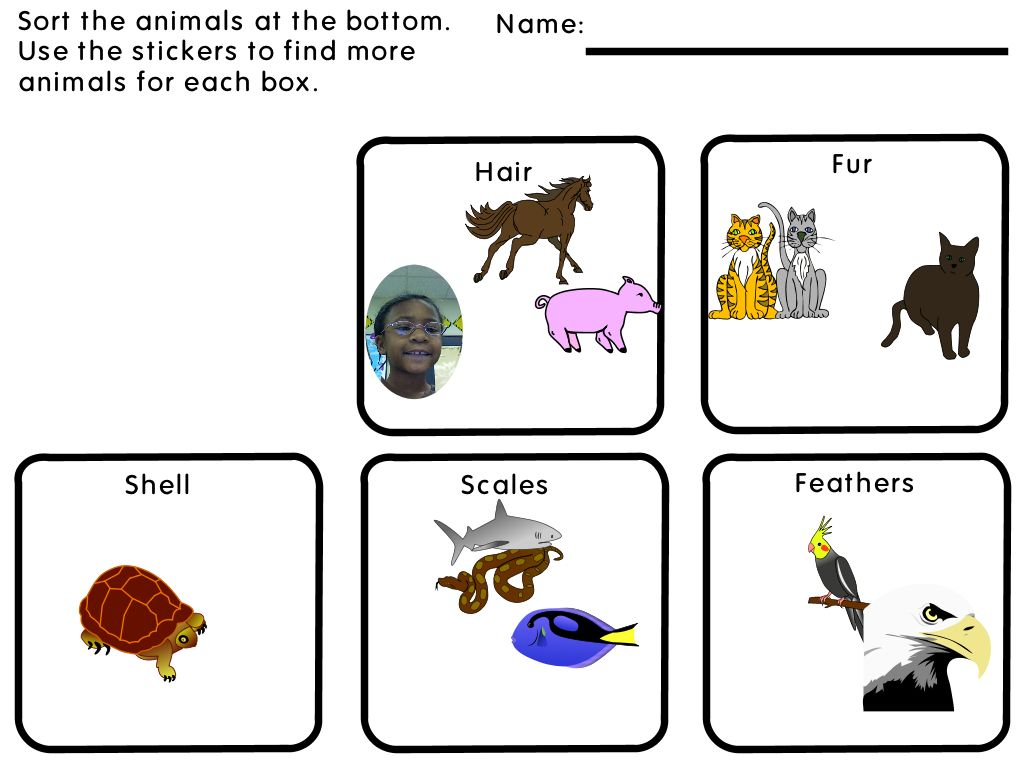 Animal Coverings Worksheet With Answers