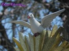 procesion-jesus-nazareno-humildad-san-cristobal-antigua-2013-035
