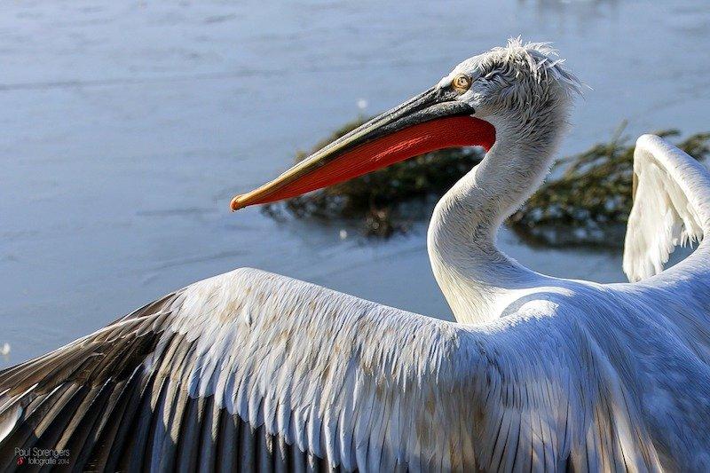 bird watching, a must do in Montenegro