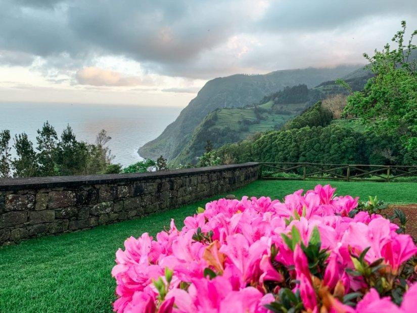 pink hydrangeas at the ponta de sossego lookout