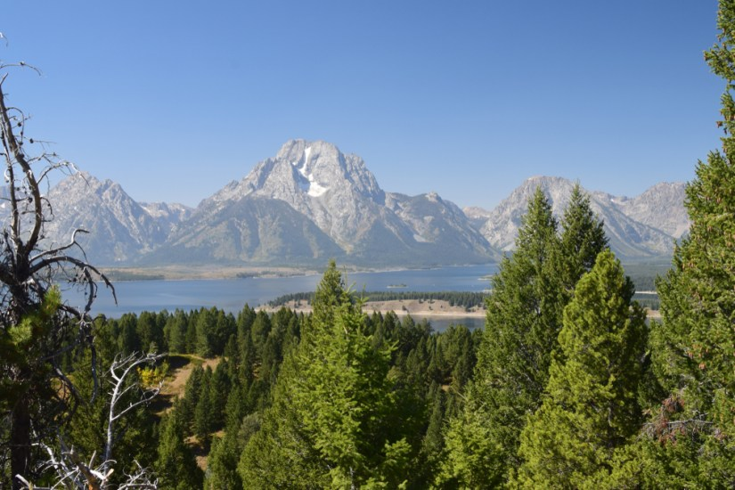 Trees in front of a lake in the distance with a large mountain with a little bit of snow on it far away, on a clear sky day in summer in Grand Teton National Park.
