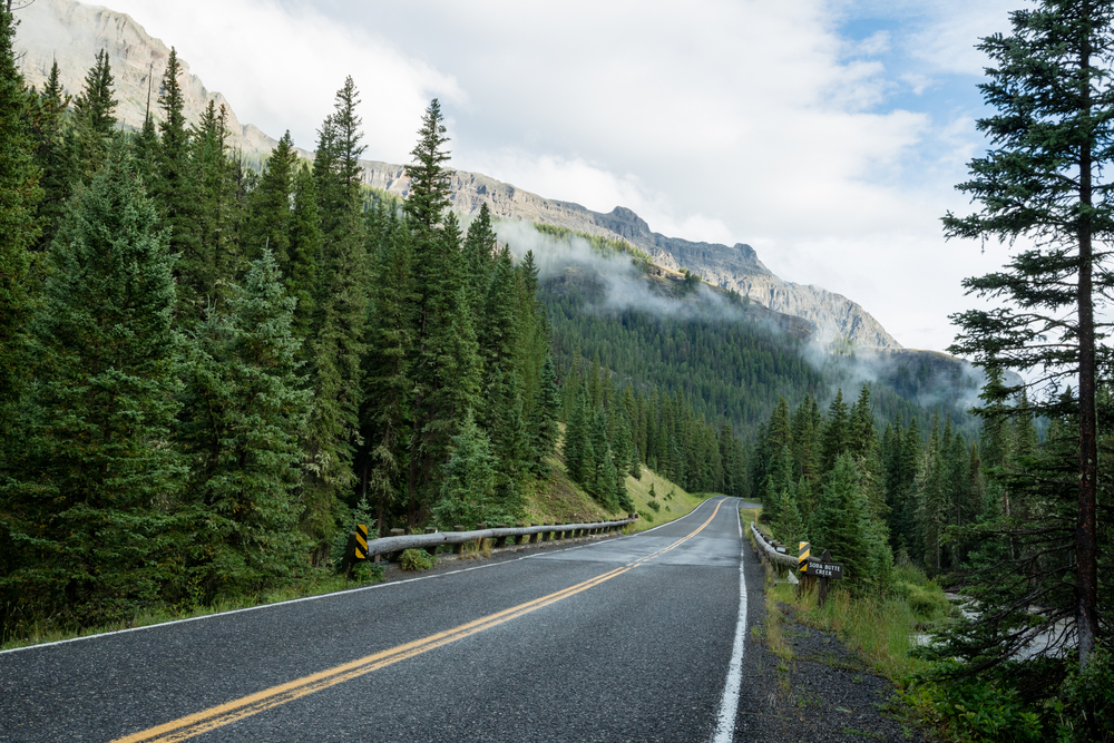 A view of a highway going through some pine trees with a slight bit of fog on some of the distant trees.