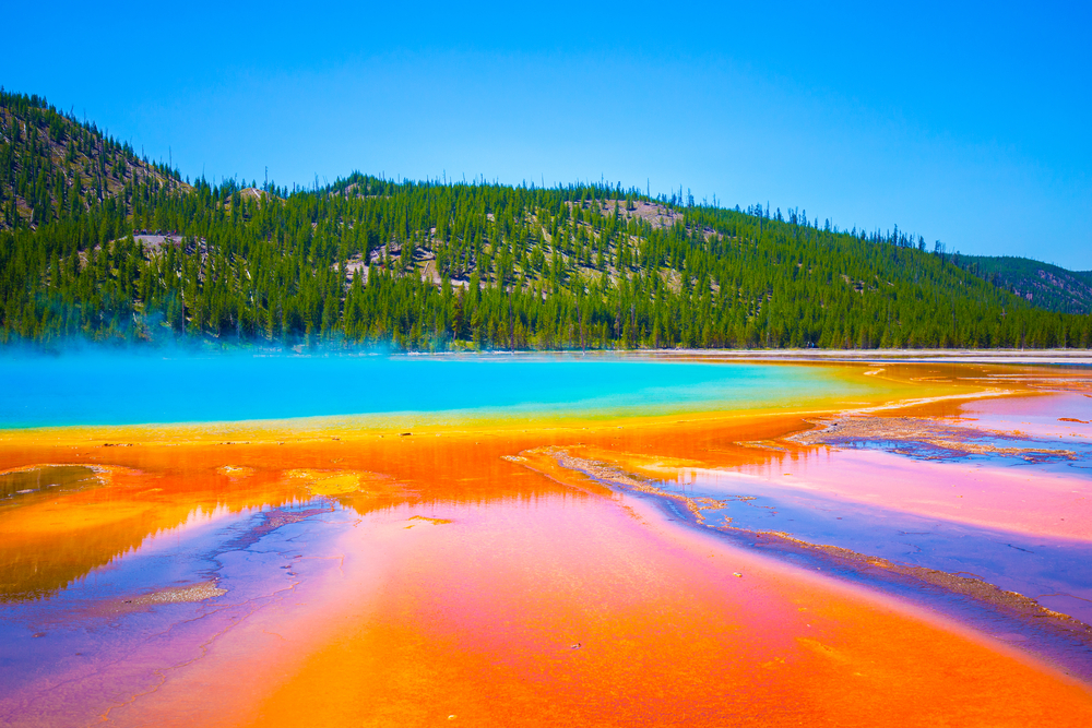 The brilliant colors of Grand Prismatic Spring: purplish-brown, orange and yellow on the rim and deep turquoise in the middle, with a tree-covered mountain behind it.