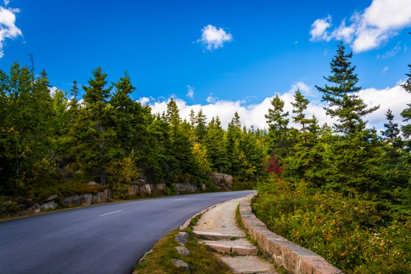 green trees along the road in acadia national park