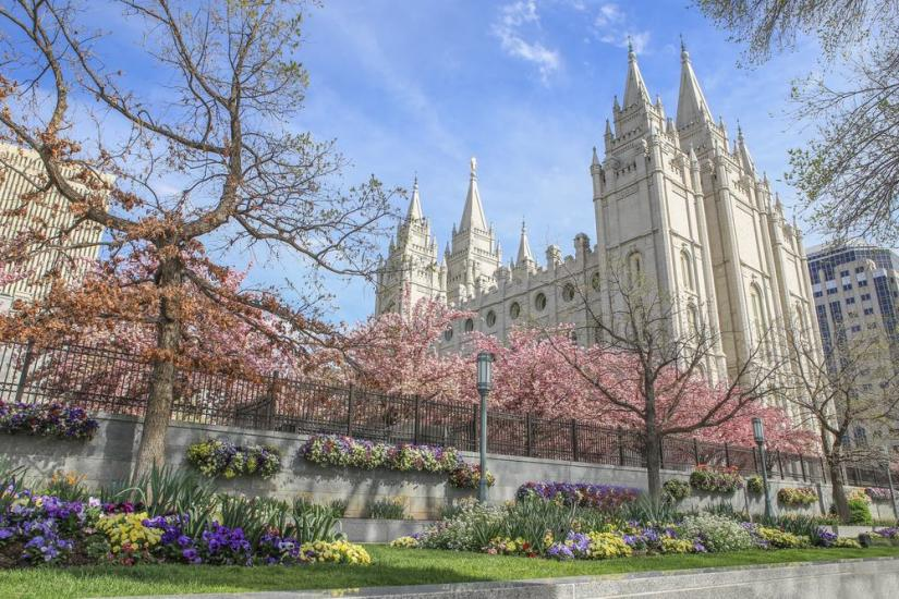 Giant Mormon church with cherry blossoms blooming in the spring and other spring flowers