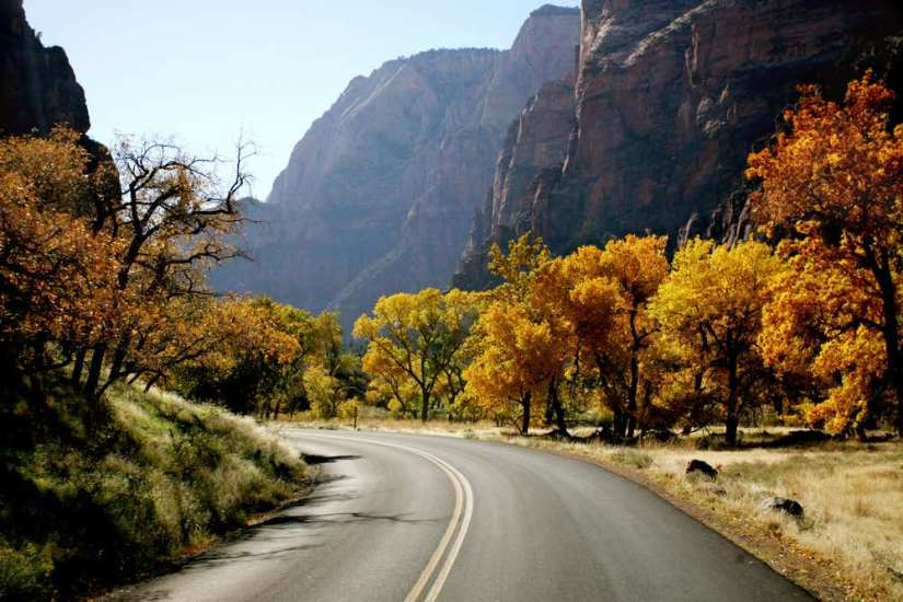 Empty road going through Zion National Park with mountains on either side and orange autumn trees alongside the road