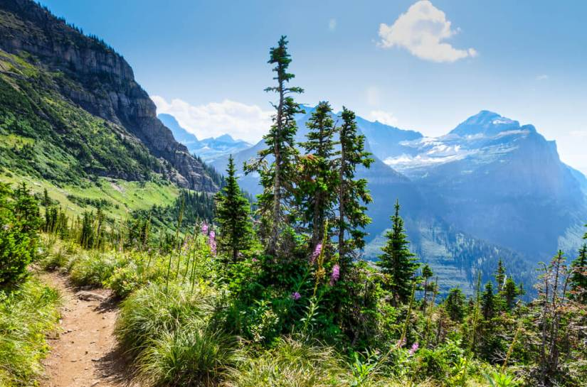 A dirt path winding through the beautiful green mountains of Glacier National Park, with some purple wildflowers and views of the other glacial mountains in the park.