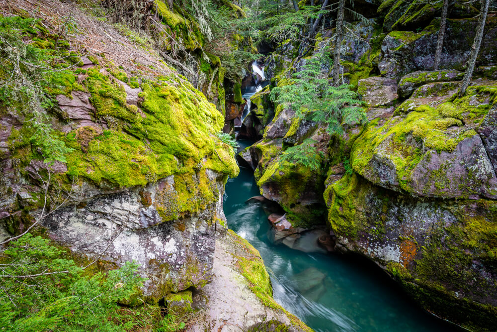 The brilliant turquoise Avalanche Creek, surrounded by mossy boulders and cedar trees on this easy Glacier National Park hike.