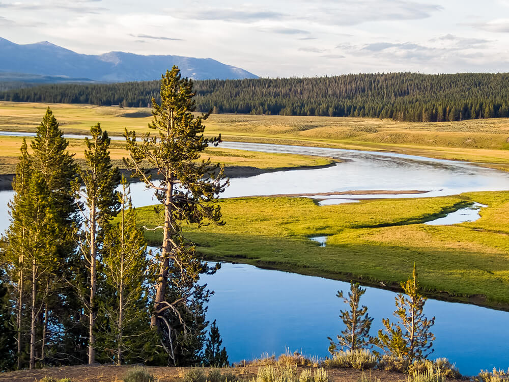Yellowstone River meandering through grassy plains surrounded by trees on a partly cloudy day.