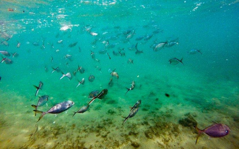 snorkeling at escambron beach