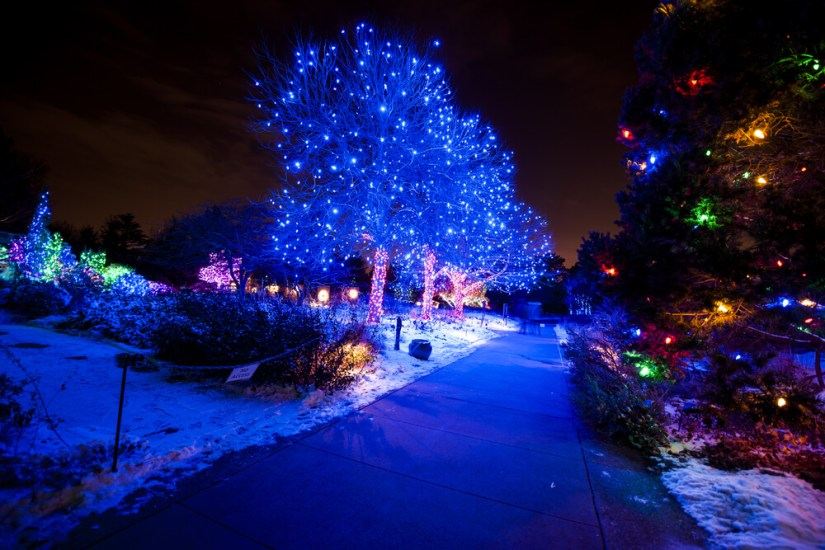 Colorful lights in trees and bushes in the Denver Botanical Garden, with snow on the ground, celebrating Christmas in Denver