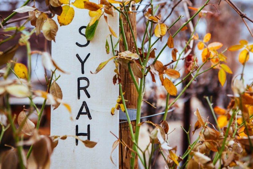A Syrah vineyard sign during winter near Cottonwood in Arizona, USA