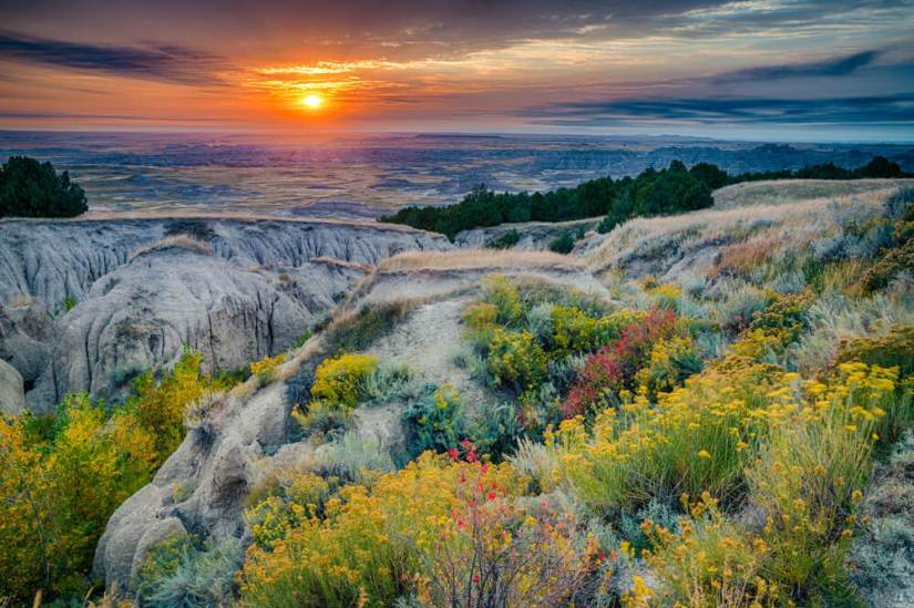 Wildflowers in Badlands National Park at sunrise