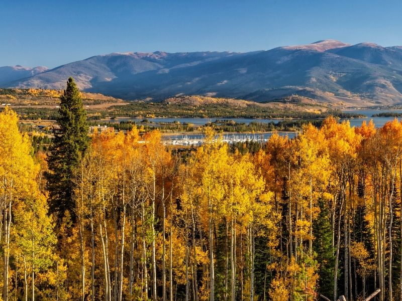 the small town of frisco colorado with tall trees rising above it with a view of the water behind it