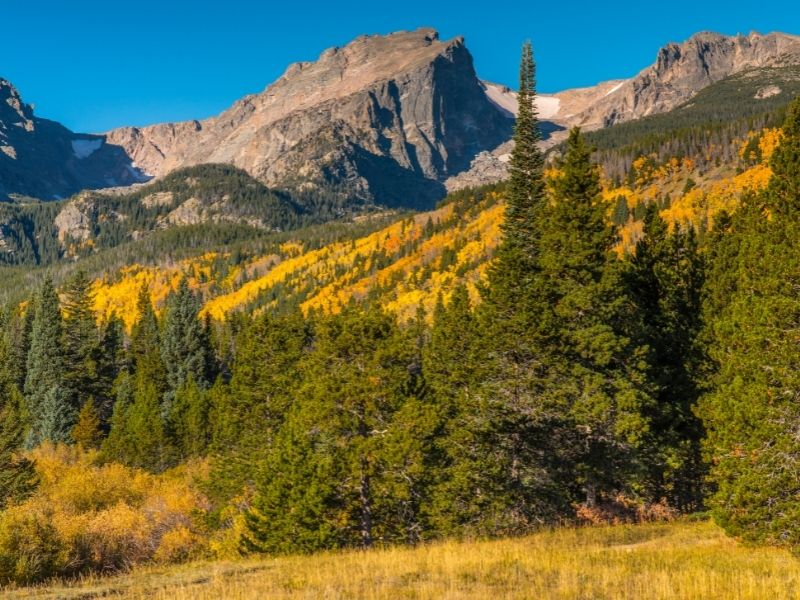 yellow trees in the distance at rocky mountain national park with mountains and small green trees