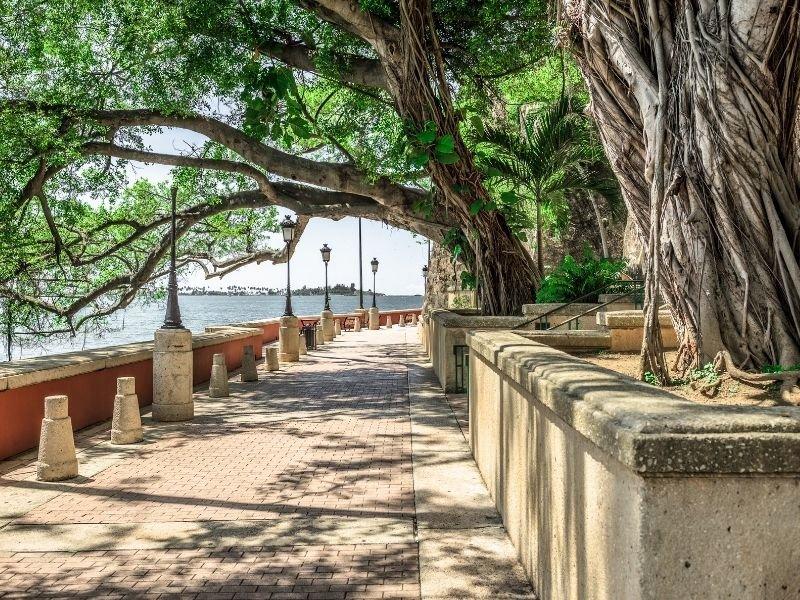 Beautiful trees creating a shaded canopy over the boardwalk Paseo de la Princesa