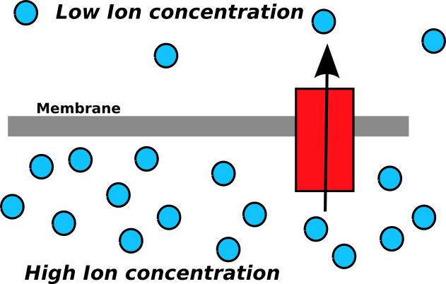 Um gradiente iônico possui energia potencial e pode ser utilizado para fornecer energia a reações químicas quando os íons passam através de um canal iônico (em vermelho).