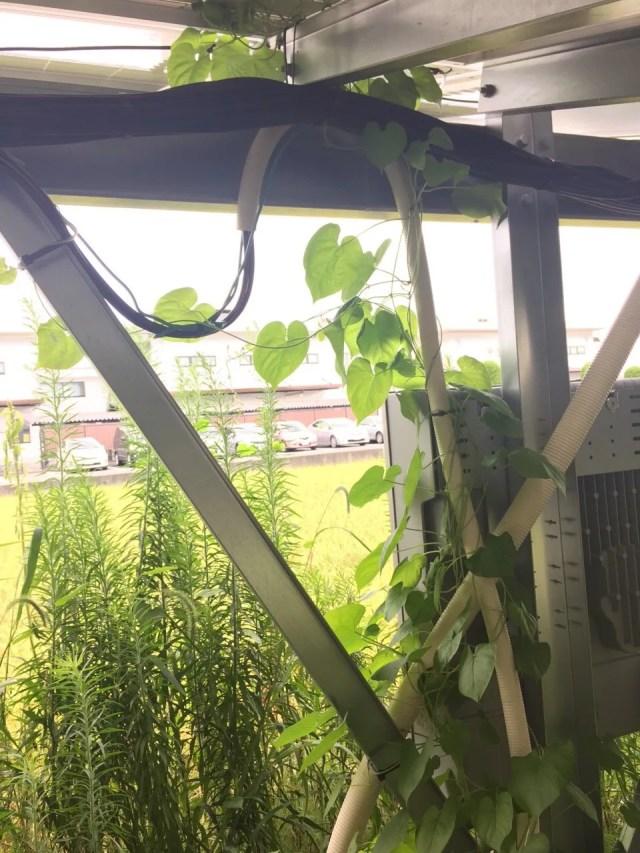太陽光 雑草対策