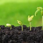Tavaszi Mezőgazdasági Remények