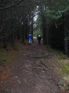 Deep in the Icelandic forest...