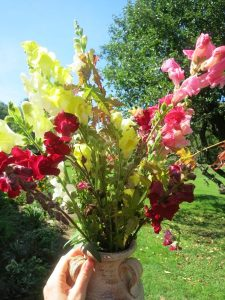 snapdragon-bouquet
