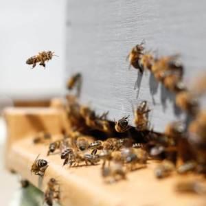 online course: Beekeeping 101 by Jacob Wustner