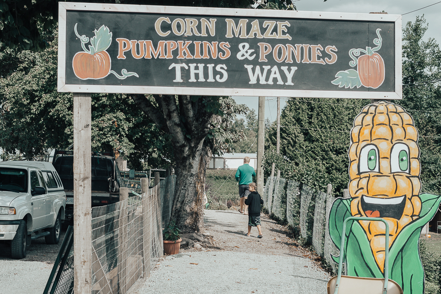 corn-maze-taves-family-farms-abbotsford-bc